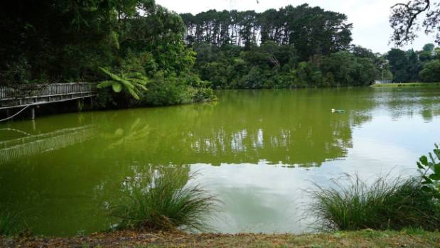 Pollution at Auckland's Chelsea Bay ponds leaves locals angry with council
