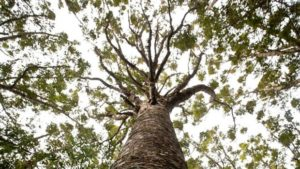 Kauri dieback spreads to a city park on Auckland's North Shore